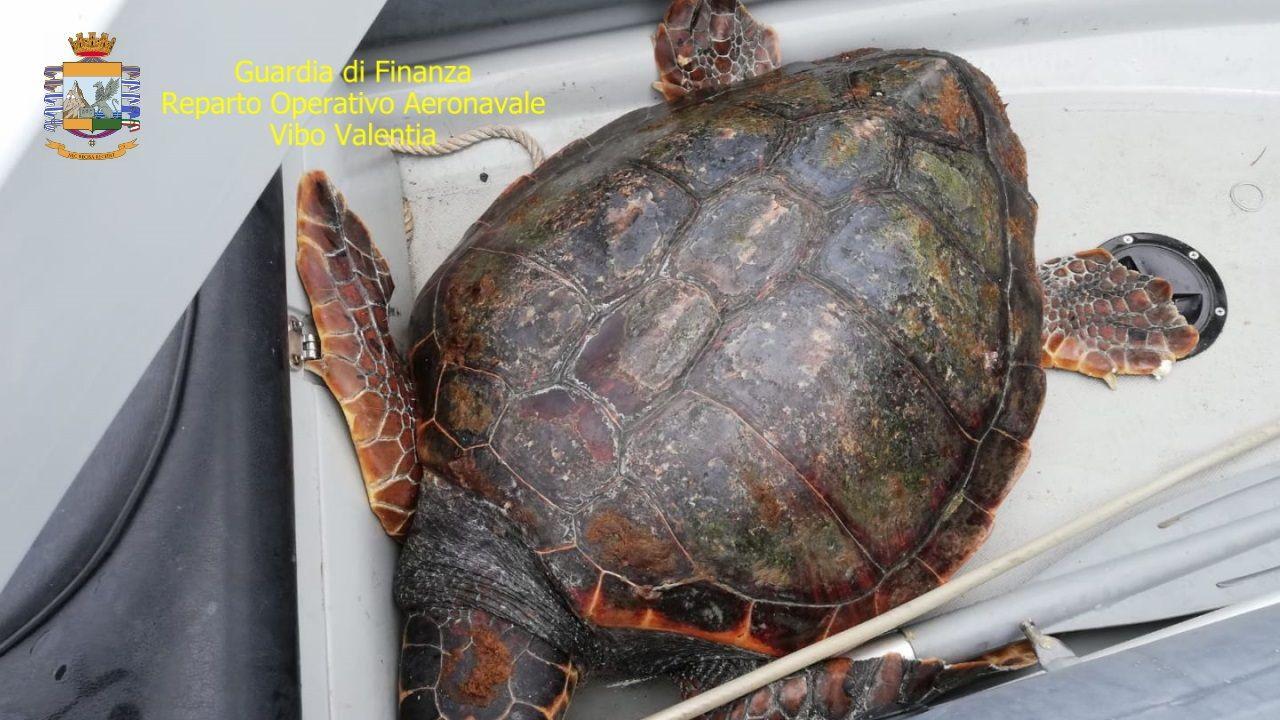 Tartaruga con plastica nello stomaco salvata e liberata