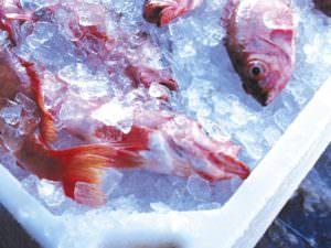 Palmi, sequestrati 55 chili di pesce
