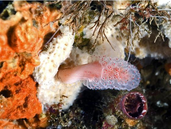 C'è un paradiso di creature sottomarine nei mari della Calabria