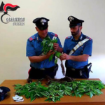 cannabis celico