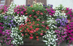 balconi fiore lamezia