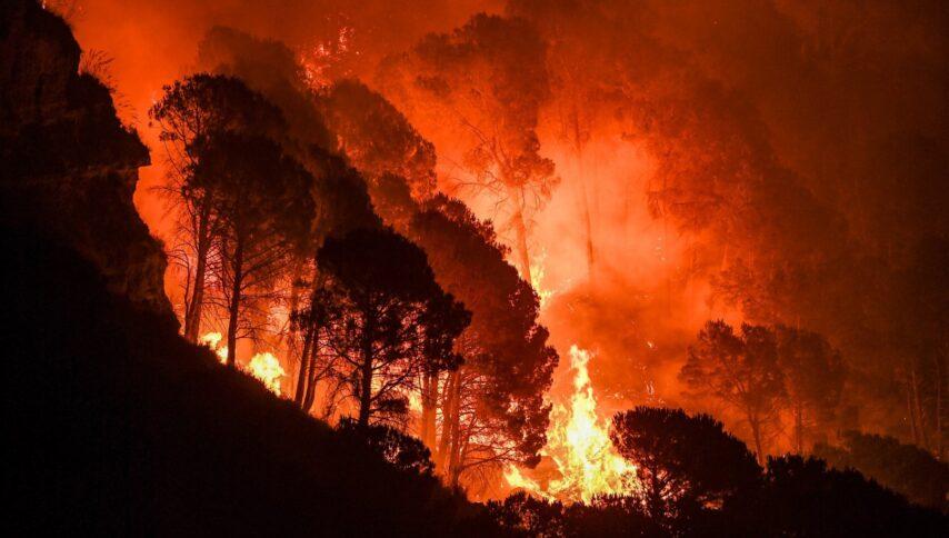 Migliaia di ettari di bosco vengono distrutti dalle fiamme ogni anno in Calabria